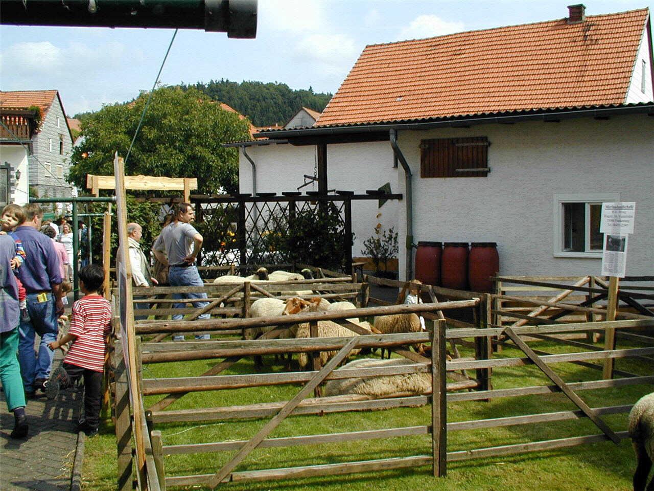 Schäfer und Schafzucht auf Brosigs (Hawwersch) Hof. (© Detlef Battefeld)