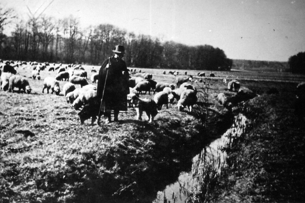 Viermündener Schafe auf der Winterweide. (© Stadt Frankenberg Eder)