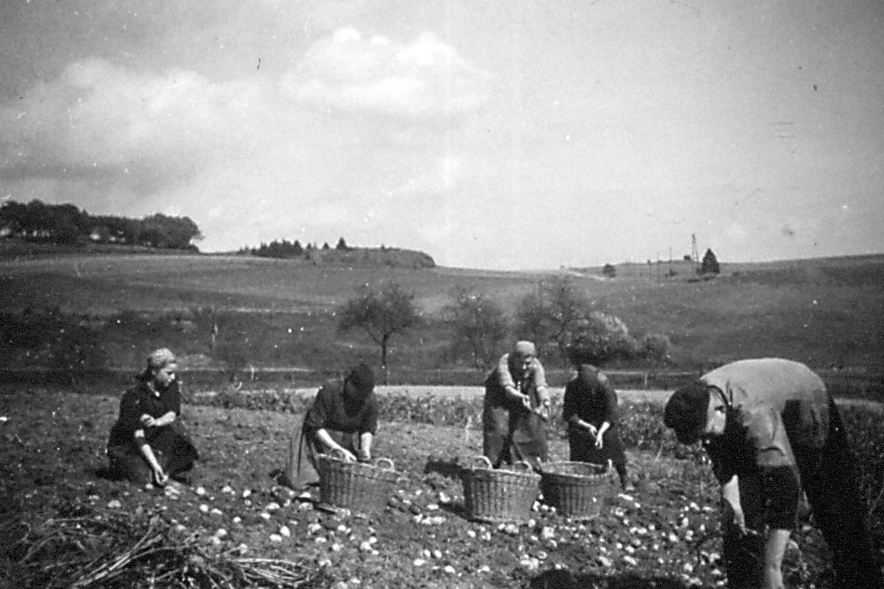 Bei der Kartoffelernte. (© Stadt Frankenberg Eder)