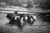 Pferdeschwemme in der Eder. (© Stadt Frankenberg Eder)